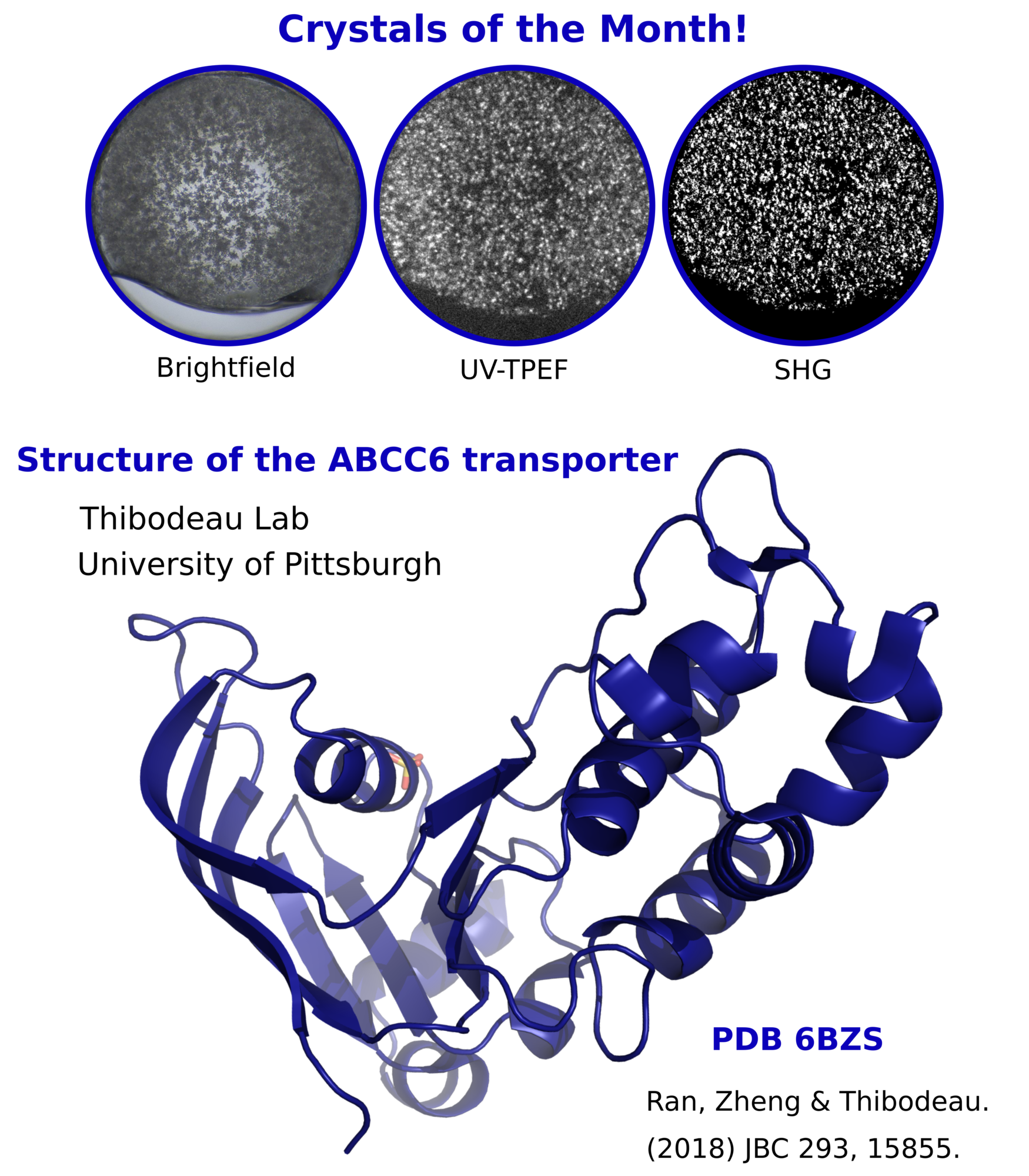 Structural analysis of the ABCC6 transporter